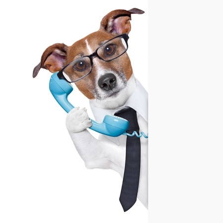20313845 - business dog on the phone behind a blank placard